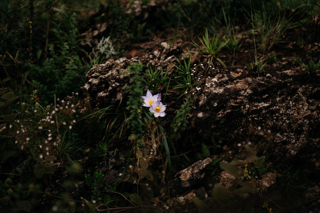 flores no topo do mundo belo horizonte