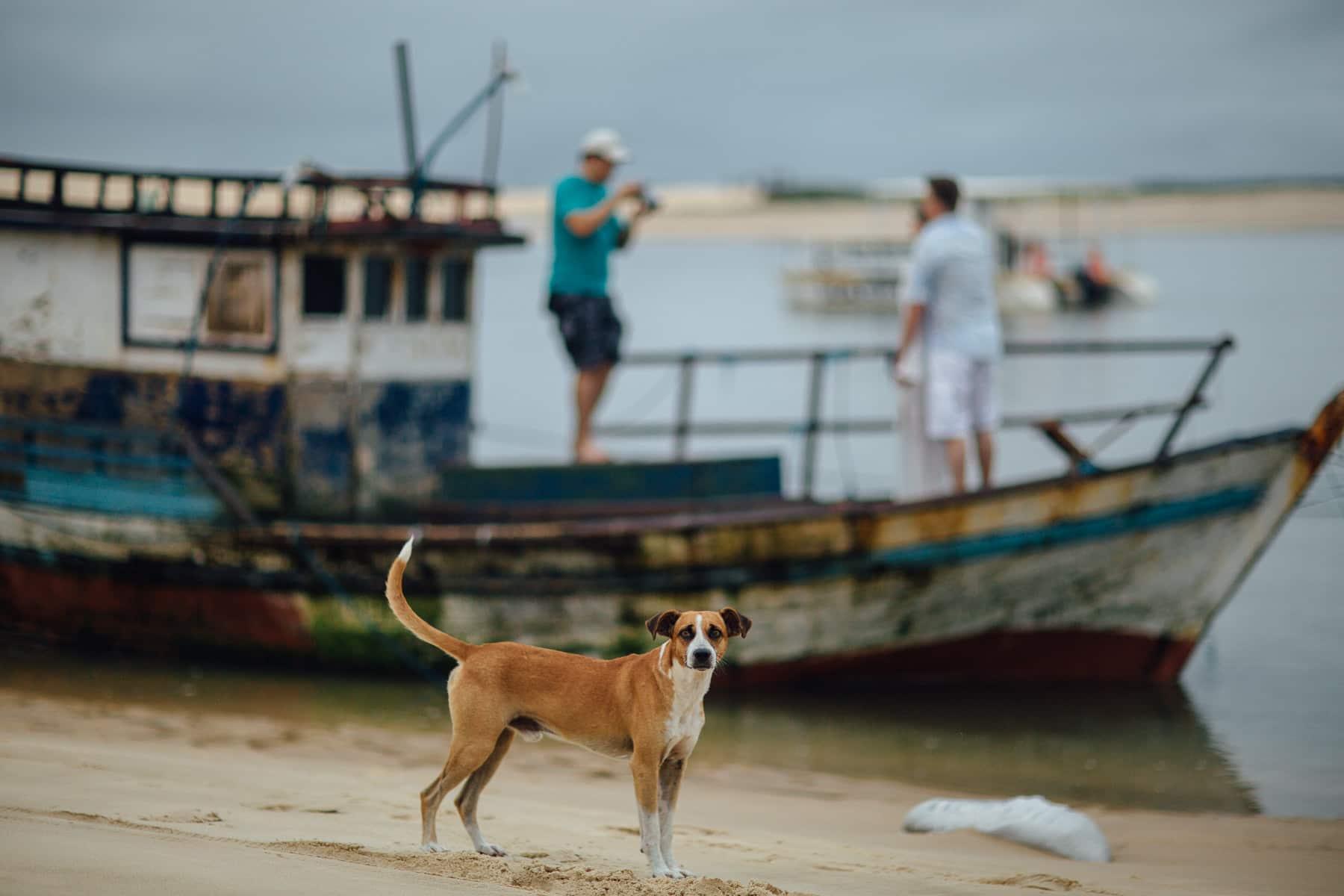 foto-de-cachorro-na-praia-1